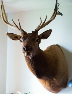 Stag's head moves every year on Sept 26
