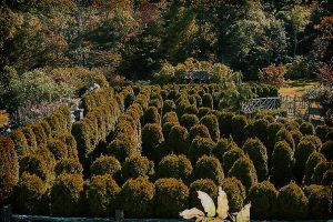 Mohonk Mountain House Hedge Maze - Shining?