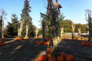 Milburn's Pumpkin Patch in Hubbard, Oregon