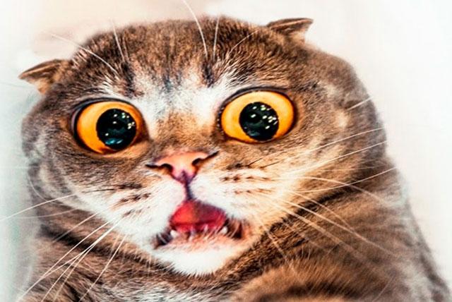 Tarrare ate a cat?
