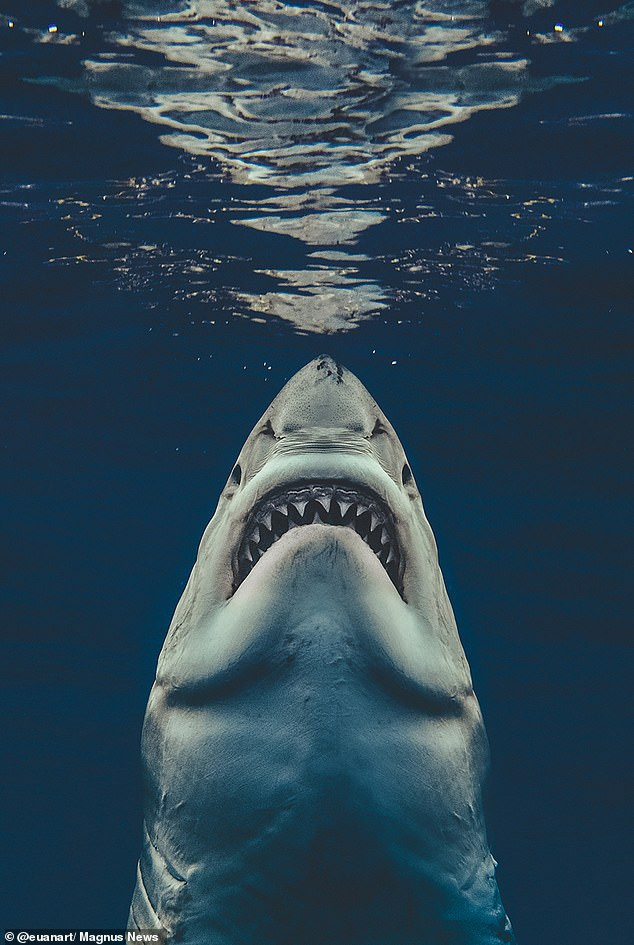 Photo by Euan Rannachan Recreates Real-Life- Jaws Poster