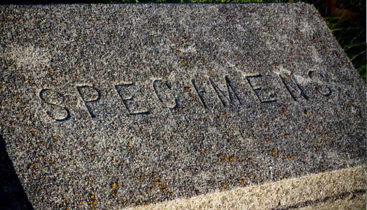 """""""Specimens"""" Tombstone"""